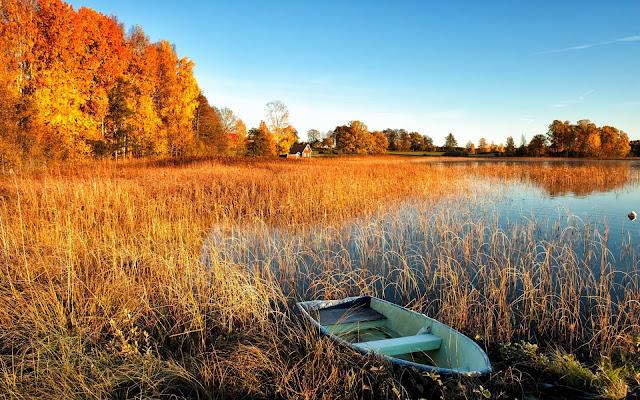 Foto herfst bootje in het riet