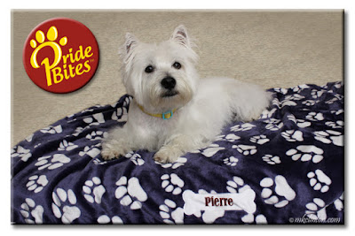 Pierre loves his PrideBites blanket Save 20% with code MKCLINTON