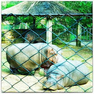 Área dos  Hipopótamos no Parque Zoológico de Sapucaia