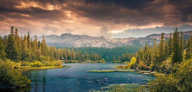 Foreste della British Columbia