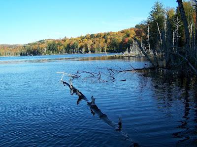 #flushgate  #fleuvegate  #eauxusees  #shitbucketchallenge Daniel Lefaivre, blogue de pêche, pêche Montréal, Street fishing