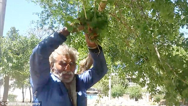 Pakistani man, 50, is addicted to eating TREES FOR 25 YEARS