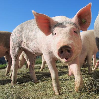 Carne de porco na Bíblia