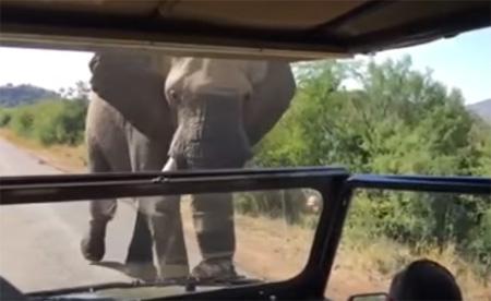 Elephant Encounter South Africa