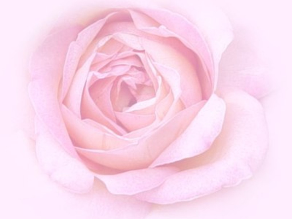 Cute Wallpaper's: Cute Pink Roses