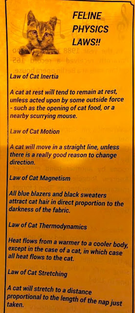 Cat Physics as described in menu brochure (Source: Soapy Smith Restaurant)