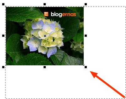Cara Mengedit Ukuran Foto dengan CorelDRAW