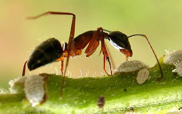 ketika itu sedang mengalami demam isu kering yang begitu panjang Kisah Nabi Sulaiman Dengan Semut