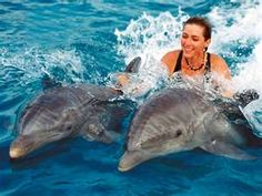 Vacation Ideas For Swimming With Dolphins