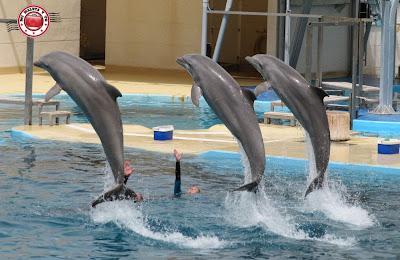Delfines en Aquopolis de la Pineda Platja - Vila Seca