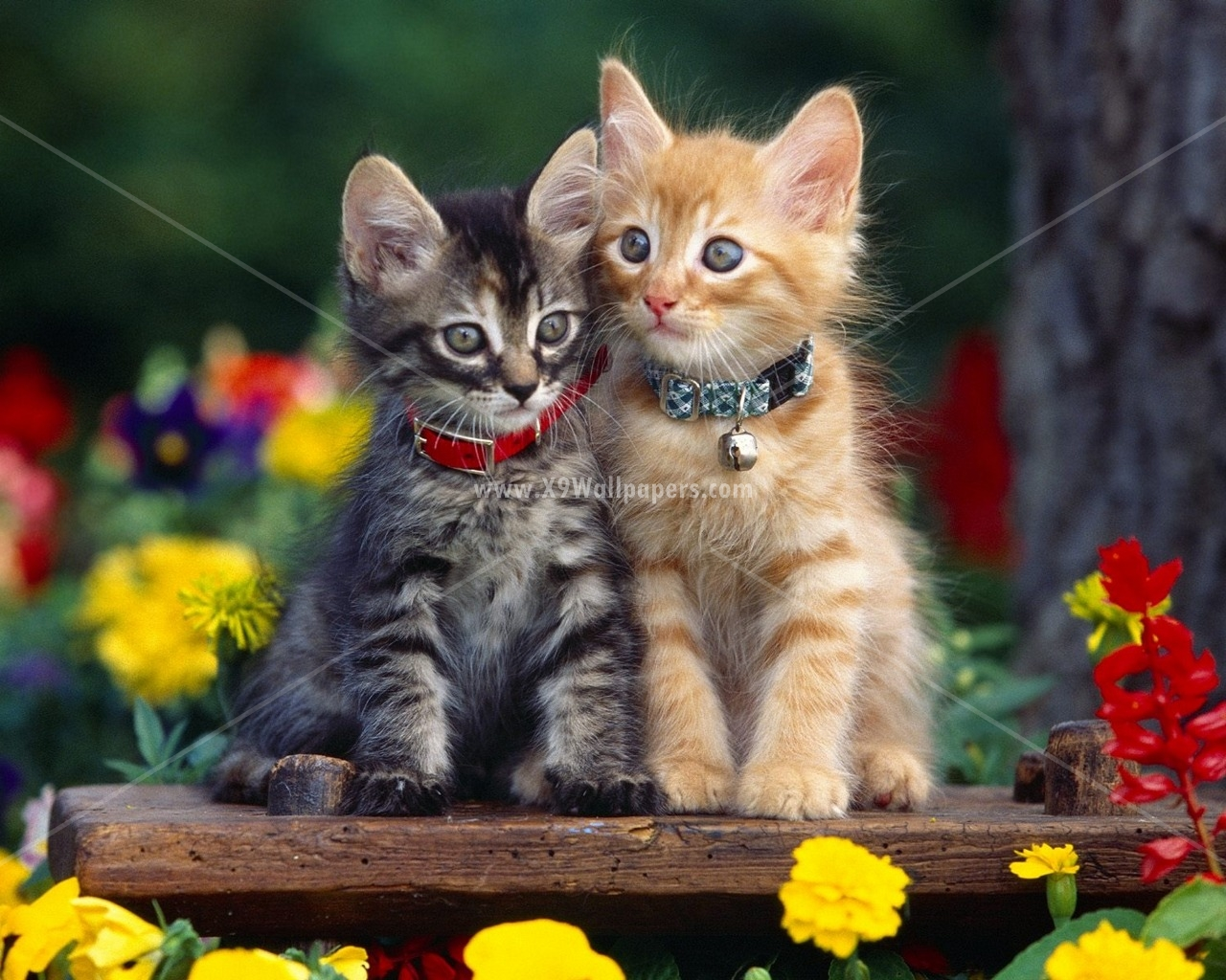 Cute Puppies And Kittens Wallpaper: 50 Cute And Beautiful Cats And Dogs HD Wallpapers And