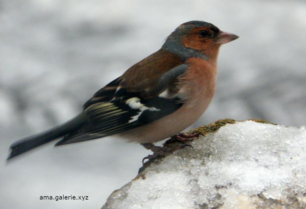 Drôles d'oiseaux par Ama artiste Alpes de Haute-Provence