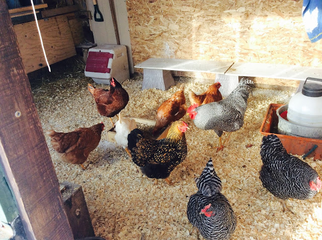 Backyard Chicken Coop Shade Cloth
