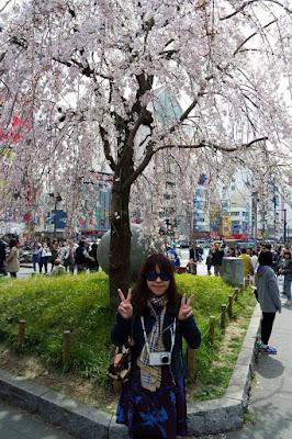 White sakura tree at Ueno Park Japan