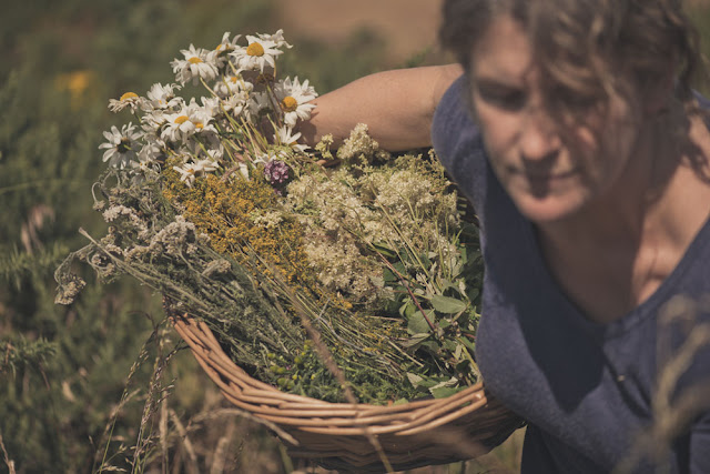 foraging for botanicals for Glendalough gin