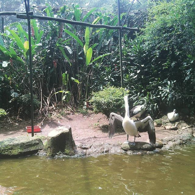 foto bangau di kebun binatang bandung