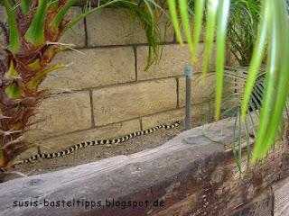 Schlange im Garten in Los Angeles: Foto von Stampin' Up! Demonstratorin in Coburg