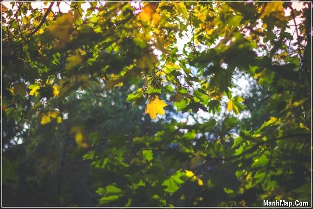 một mùa thu nữa lại về