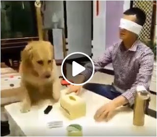 Strange: A dog helps a blind man