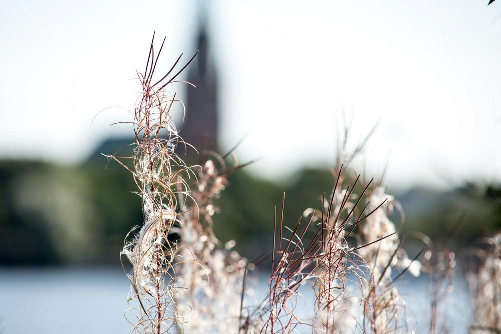 Kirjurinluoto, Pori, syksy, luonto, valokuvaus, valokuvaaminen, valokuvaaja Frida Steiner, Visualaddict, Suomi, ulkoilu, outdoors