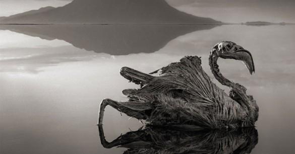 Kutukan Danau Natron Afrika
