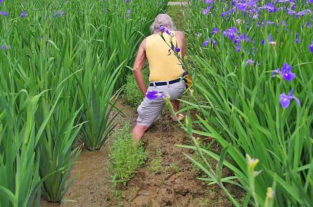 Ryukyu Mike struggling in the mud