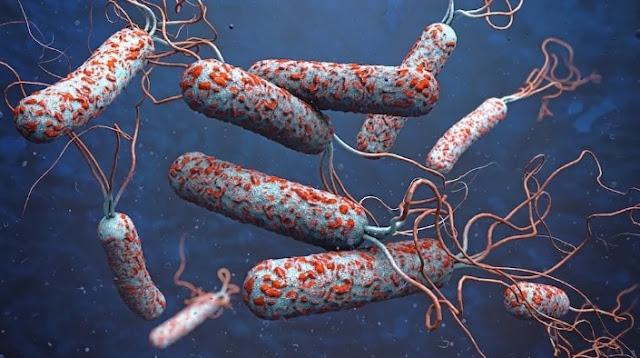 Penyebab Kolera