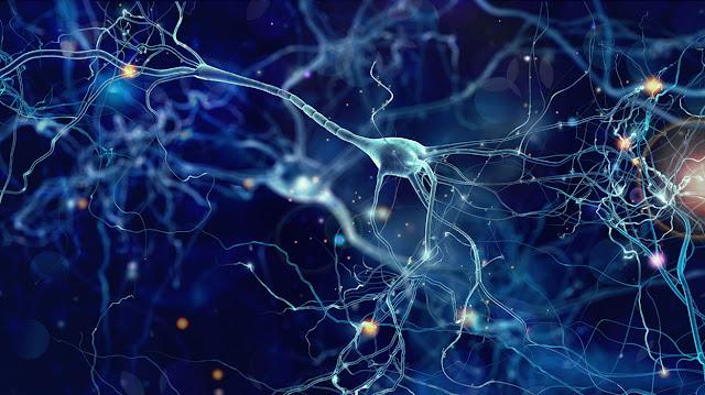 Apakah Itu Pengertian dari Neuron