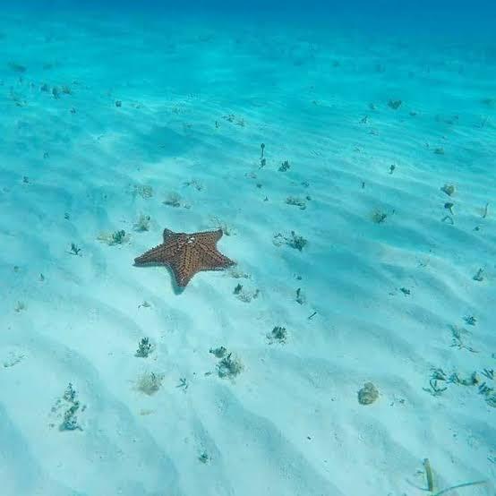 """¿Dónde está la famosa playa """"El cielo"""" de Cozumel?"""
