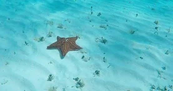 Dónde Está La Famosa Playa El Cielo De Cozumel Viajabonito