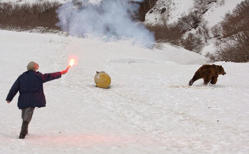 Грядущем Царе выживание в дикой природе встреча с медведем сертифицированные онлайн-курсы: