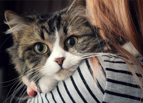 صور خلفيات بنات مع صور لقطط جميلة كيوت