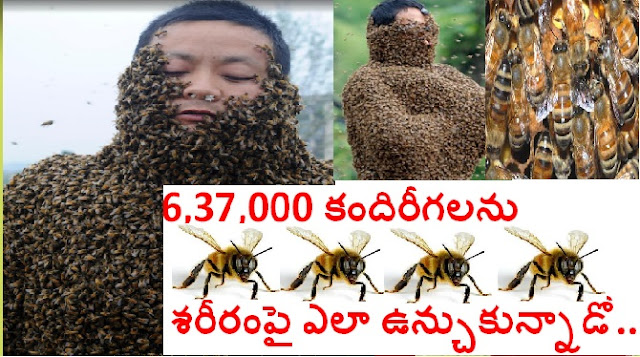 637,000 Bees On The Entire Body || Heaviest Mantle Of Bees