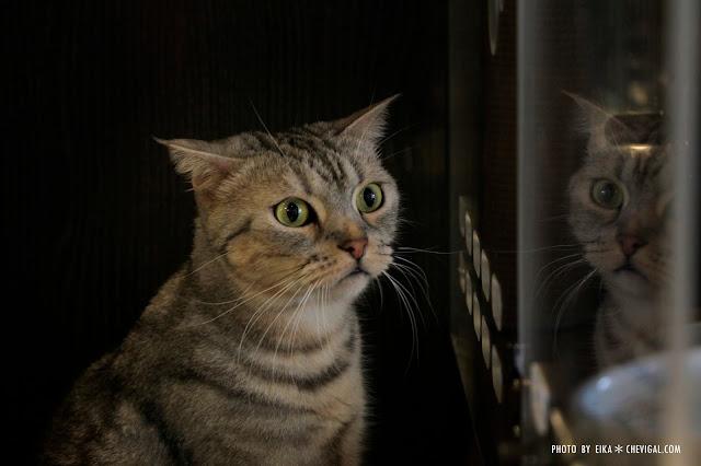 MG 0062 - 台中南區│山本屋日式拉麵。有貓掌蛋的拉麵也太療癒!還有萌萌店貓陪你一起玩喔!