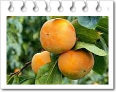 Manfaat buah kesemek untuk kesehatan tubuh