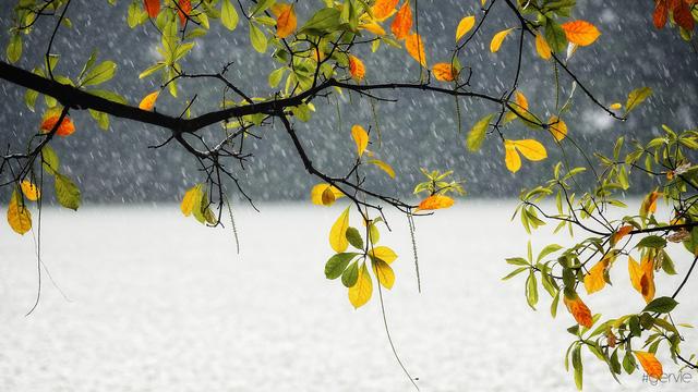 ảnh cơn mưa mùa thu