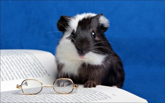 Thư giãn với hình ảnh chuột Hamster