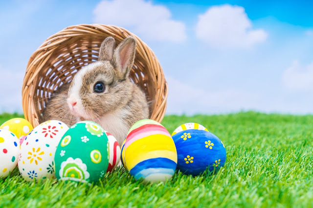 Cute Easter Bunny Images for Facebook