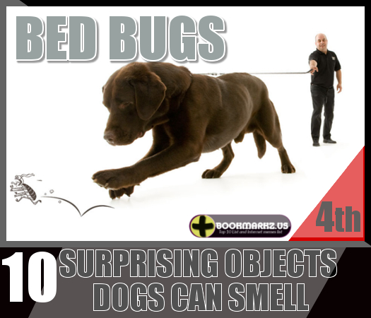 10 Surprising Objects Dogs Can Smell | Top 10 List