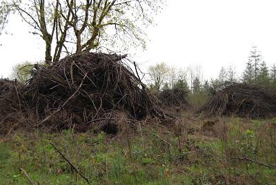 scion wood cut down grass wildflowers poem caroline gerardo