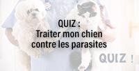 QUIZ : Traiter mon chat contre les parasites