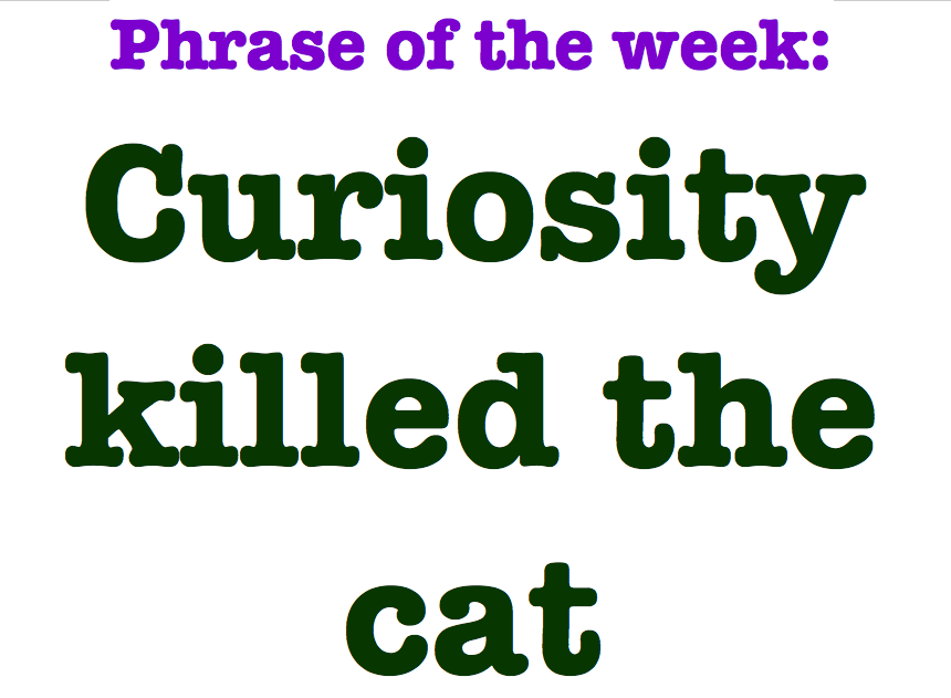 Curiosity killed the cat idiom sentence examples