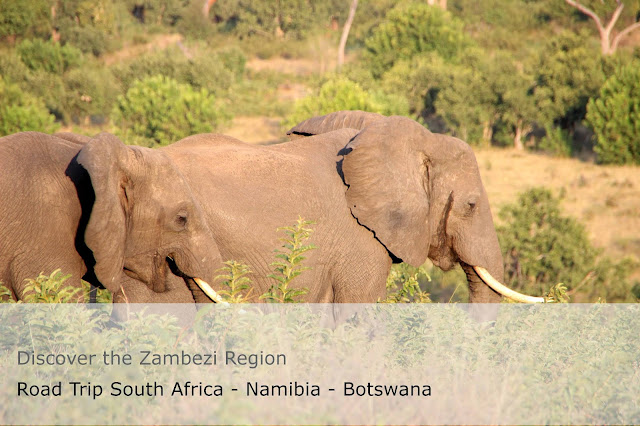 Two elephants on the cover of the guide to Discover the Zambezi Region Road Trip South Africa - Namibia - Botswana