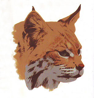 http://tips-trick-idea-forbeginnerspainters.blogspot.com/2016/03/stepbystep-painting-cat-head-with-acrylic.html