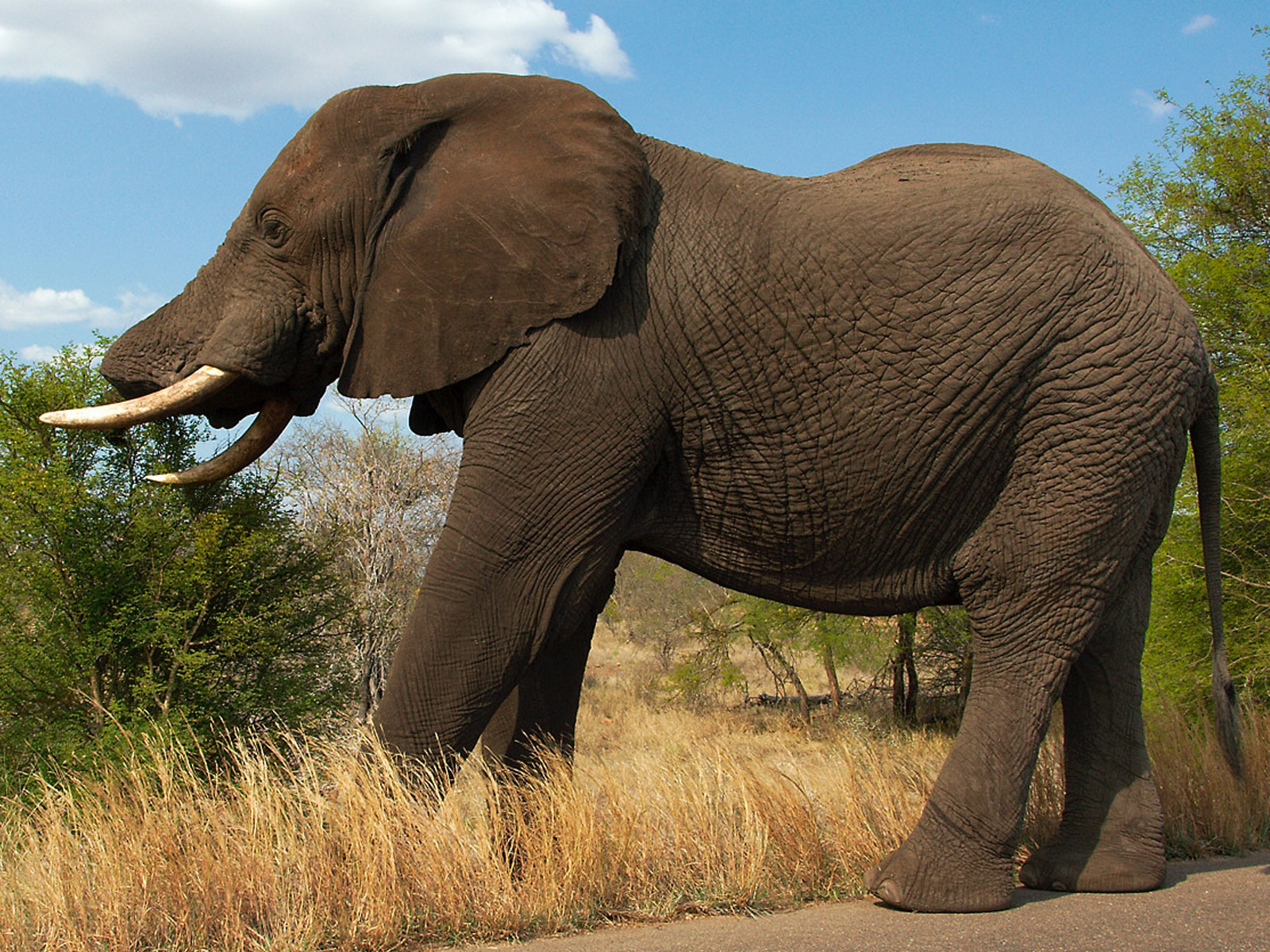 Elephant And The Baby Elephant
