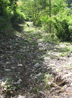 Ceiba - Kapok seed fiber on the ground