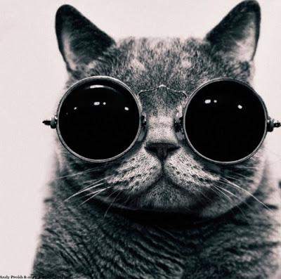 kucing hensem pakai cermin mata yang cool