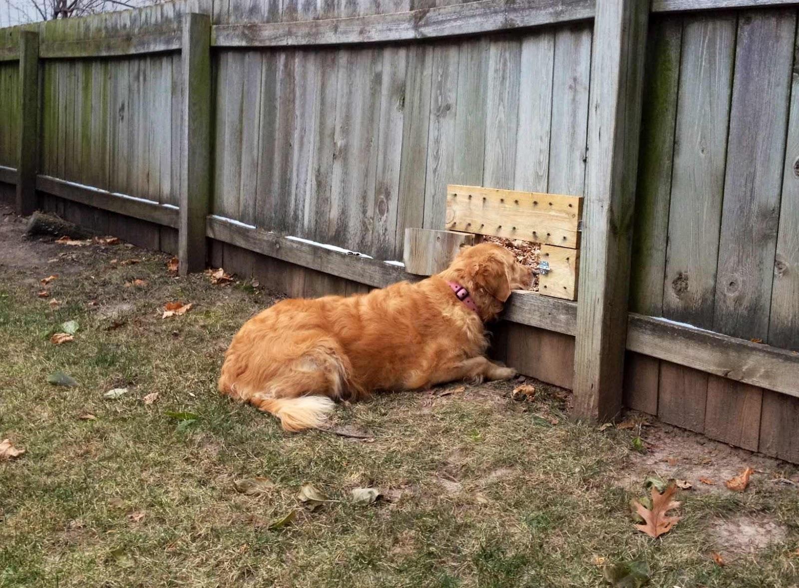 Dog Friendly Backyard Ground Cover Home Design And Idea