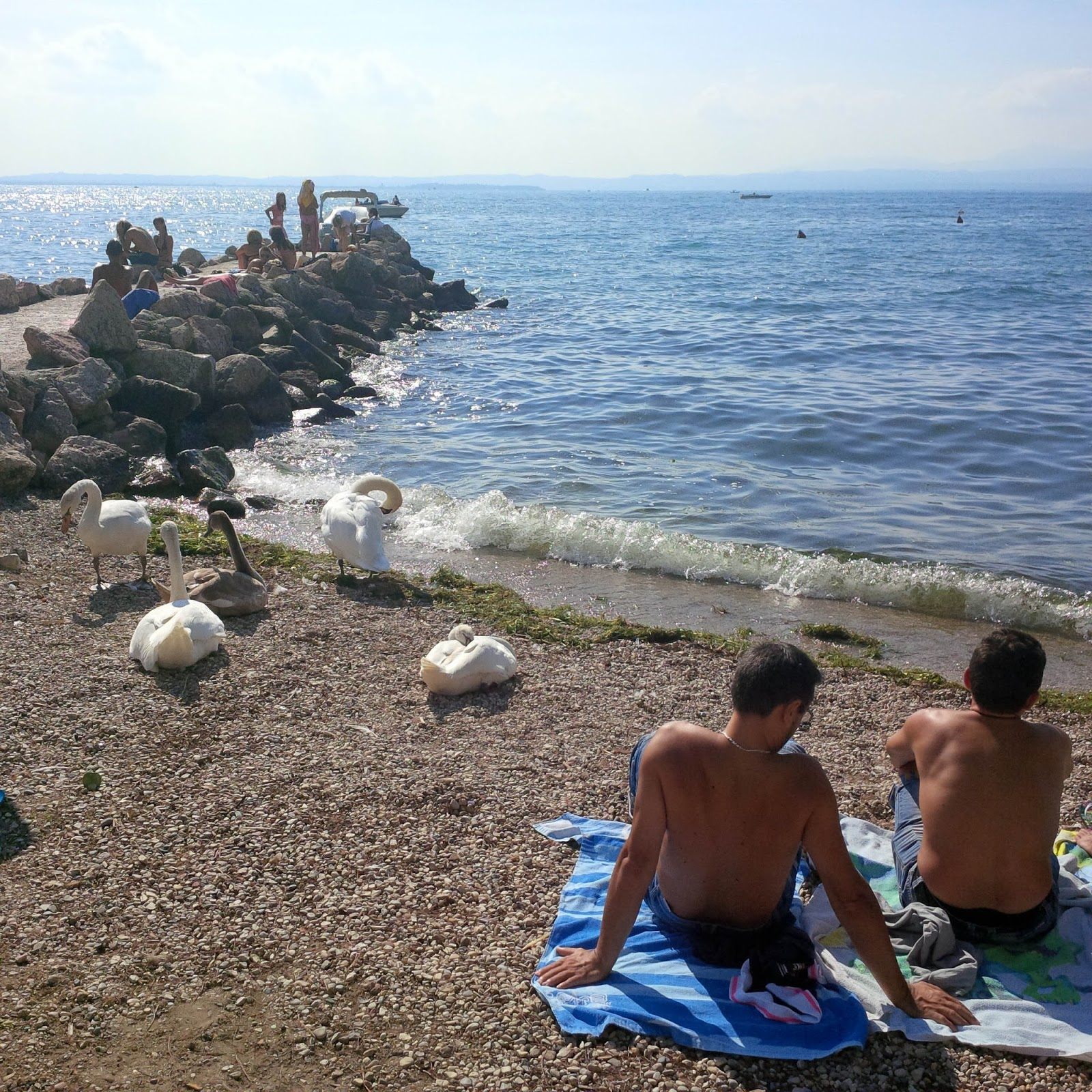 Men and swans sunbathe in Lazise, Veneto, Italy