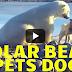 Το φιλικό χάδι μιας αρκούδας σε σκύλο γίνεται… viral!